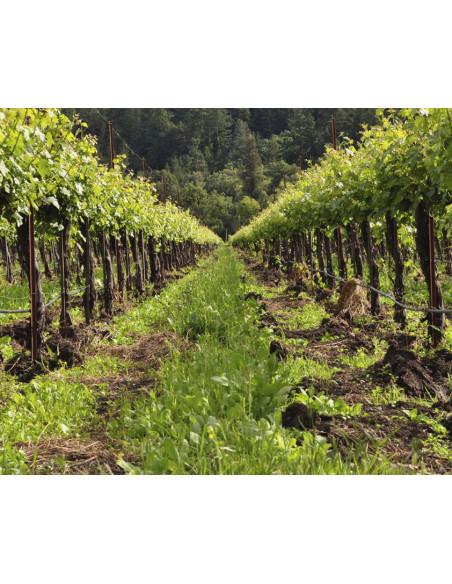 Baladez-vous dans le vignoble vallonné de Saint-Emilion