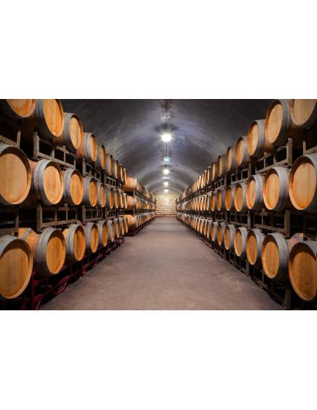 mais aussi des caves à vin...