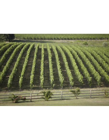 Sillonnez les routes du vin de Saint-Emilion et Pomerol