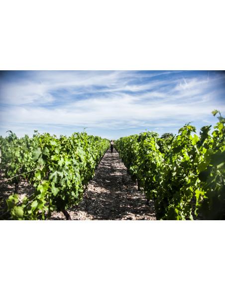 Découverte du vignoble Bordelais et de la route des vins