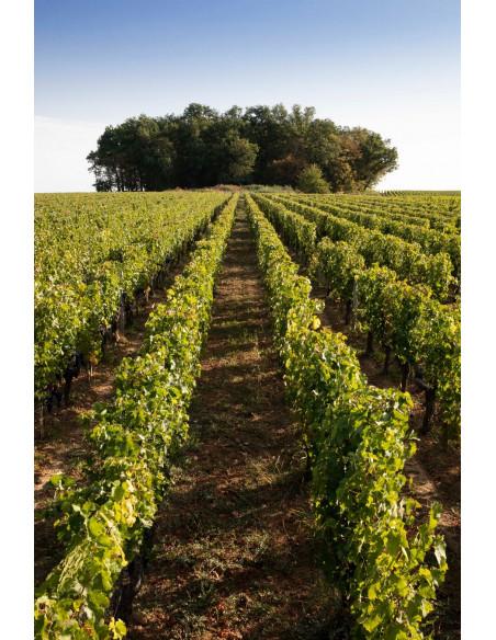 Le vignoble en pente de Saint-Emilion