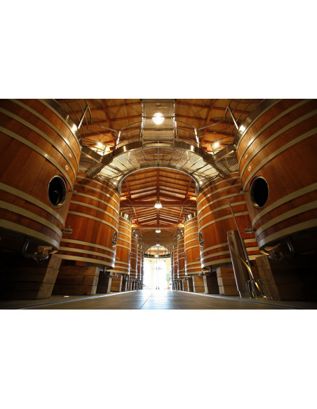 Visite domaine viticole team building entreprise