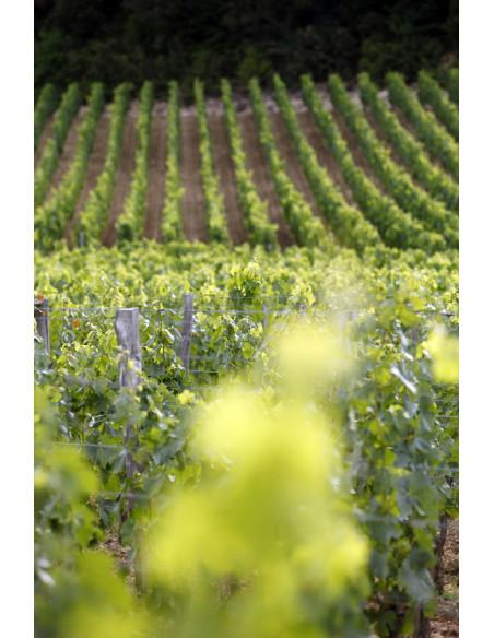 Admirez le vignoble de Saint-Emilion à perte de vue...