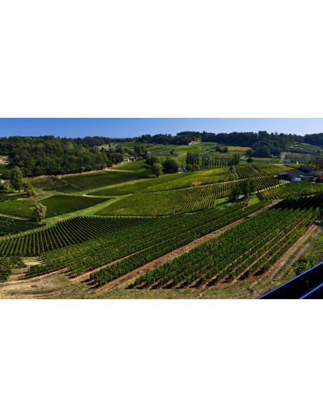 Une vue du vignoble de Saint-Emilion