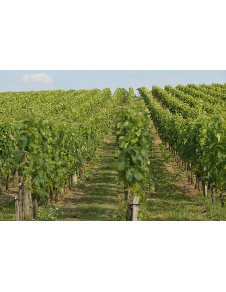 Casino du vin au coeur du vignoble de bordeaux