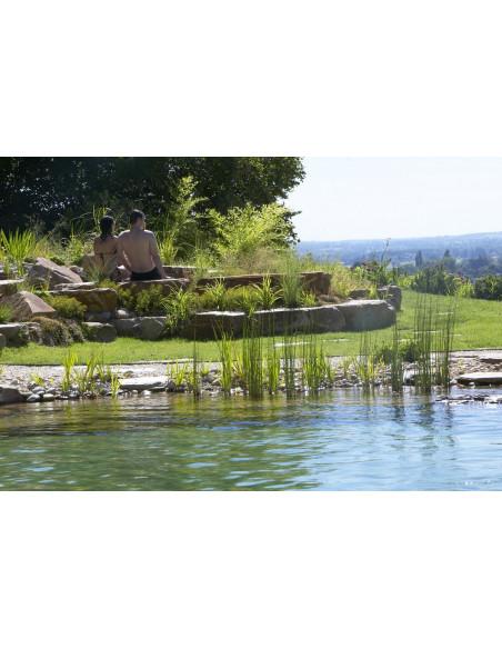 La piscine naturelle avec vue sur le vignoble