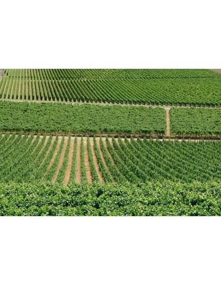 Parcourez la route des vins...