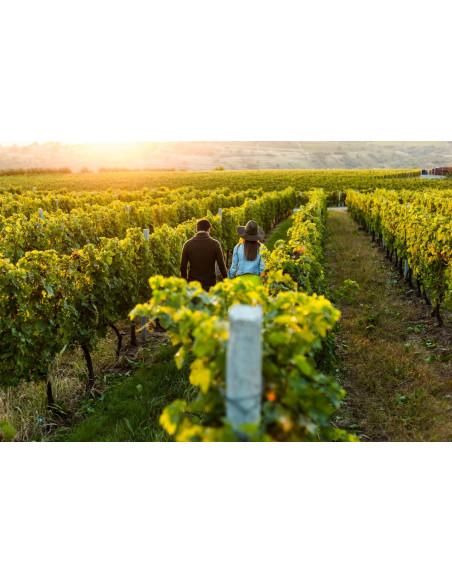 Parcourez le vignoble de Bordeaux, un havre de paix à savourer à deux !