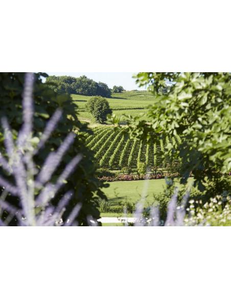 Le vignoble de Bordeaux vu depuis le Château où vous serez hébergés