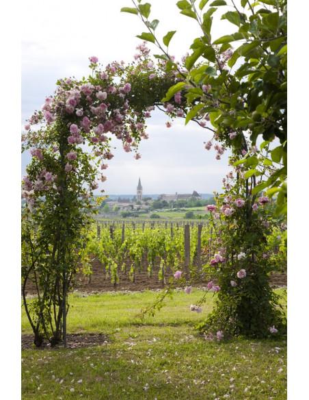 Vignes à perte de vue, des balades sont possibles à partir du Château
