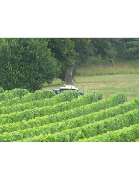 Le Château est encerclé par le vignoble...splendide & reposant