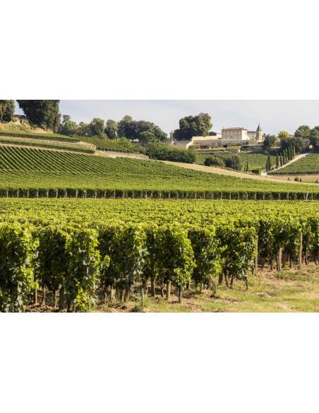 Admirez le vignoble sur la route des vins, c'est un océan de vignobles...