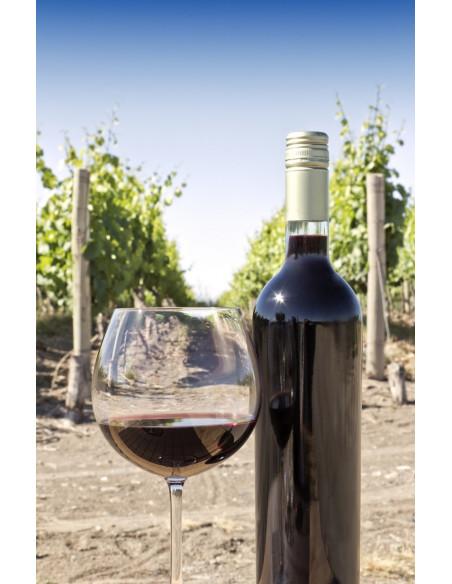 Découvrez le vignoble du Château et dégustez son vin BIO