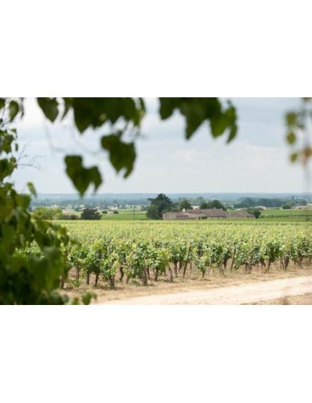 Le vignoble de Saint-Emilion...