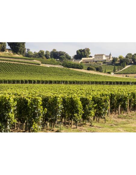 Le paysage du vignoble de Saint-Emilion
