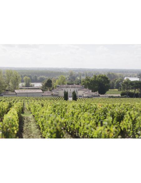 Visitez le vignoble et apprenez les travaux de la vigne durant 1 an...