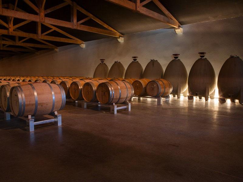 Découvrez un COURS OENOLOGIE BORDEAUX dans le vignoble de bordeaux