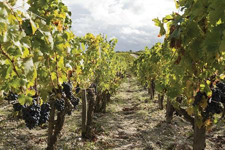 Visitez le vignoble Bordelais, ses domaines viticoles, ses caves à vin, participez à un cours œnologie, un atelier du vin, dégustez des grands crus Bordeaux.
