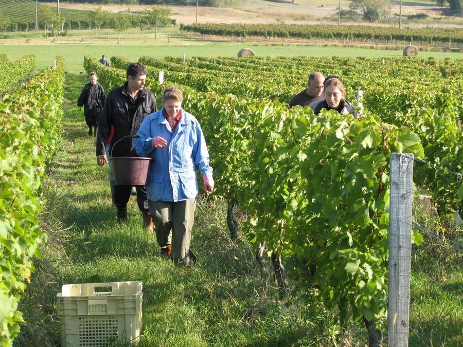 Vignerons dans les vignes de Saint-Emilion