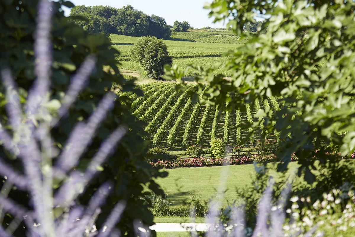 Vue du vignoble depuis le château Saint-Emilion