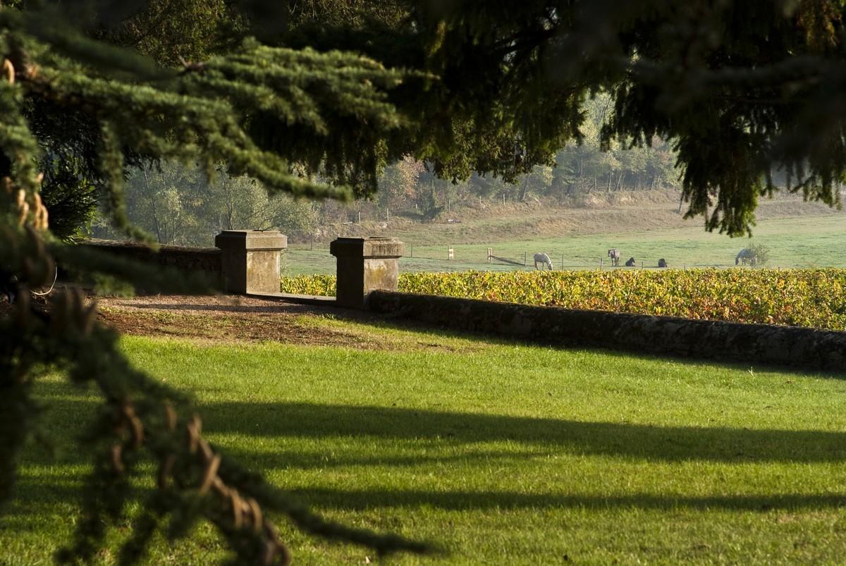 Vignoble et parc du château vin de Bordeaux