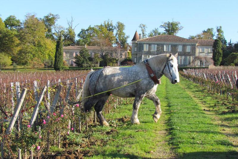 Durant votre week-end à Bordeaux, visitez les caves de Châteaux, assistez à un cours oenologie sur la route des vins de Saint-Emilion pour apprendre le vin.