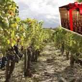 Offrez un coffret cadeau sur route des vins Bordeaux : cours œnologie, week-end dans les vignes...Tous nos programmes sur @laroute_des_vins  #vinsdebordeaux #coffretcadeau  #saintemiliongrandcru #ideecadeaunoel