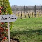 Venez découvrir les vins du vignoble Bordelais sur place à Saint-Emilion 🎁  @laroute_des_vins  #ideecadeaunoel #plaisirdoffrir #coffretcadeau #winetours #oenology #oenologie #offrir #cadeaunoel #faireplaisir #experience
