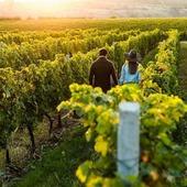 Venez profiter d'un week-end en Bordelais, beau temps prévu ce we, pas de couvre-feu 😉 www.routedesvins.fr